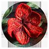 warsztaty filcowania n amokro kwiatow kursy wideo warsztaty online